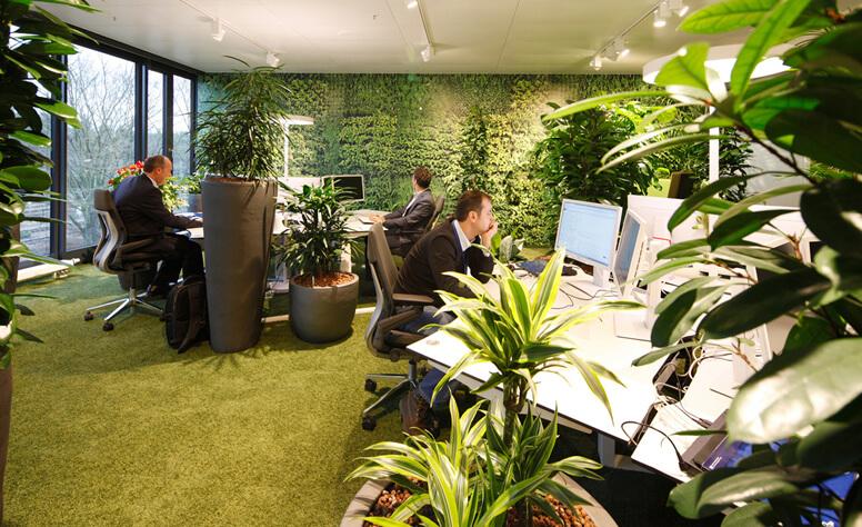 オフィスにグリーンを!観葉植物のススメ