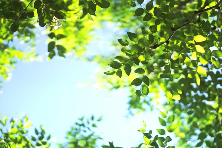 オフィスと色にまつわるお話 その4 【緑/Green】