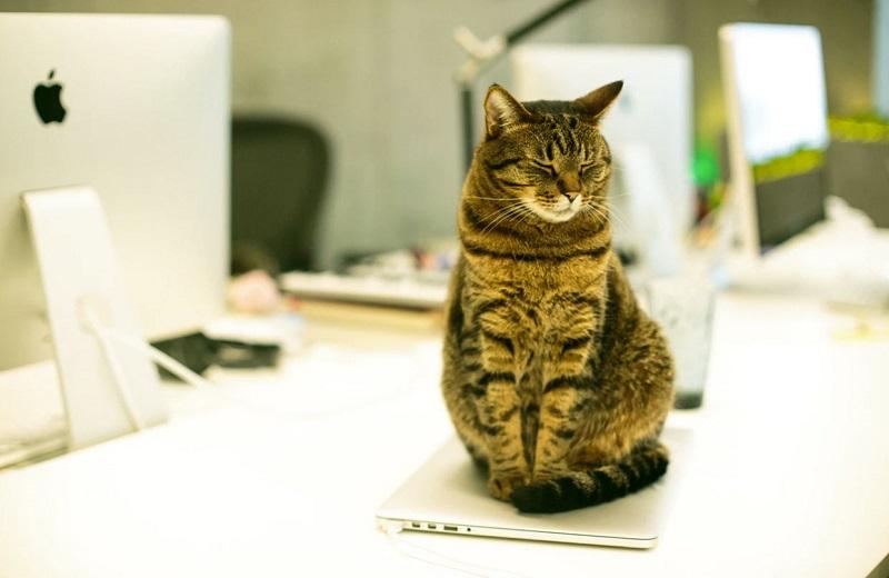 猫型ワークのすゝめ -ねこつき!ー
