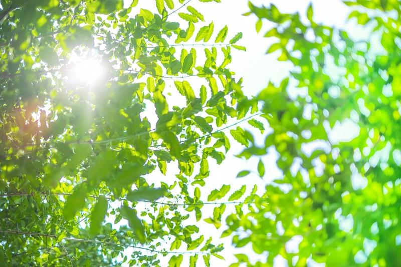 日光浴でストレス解消